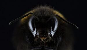 mosca macro