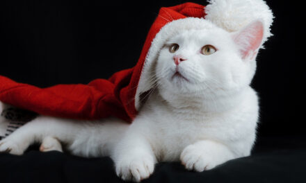 Lo spirito natalizio